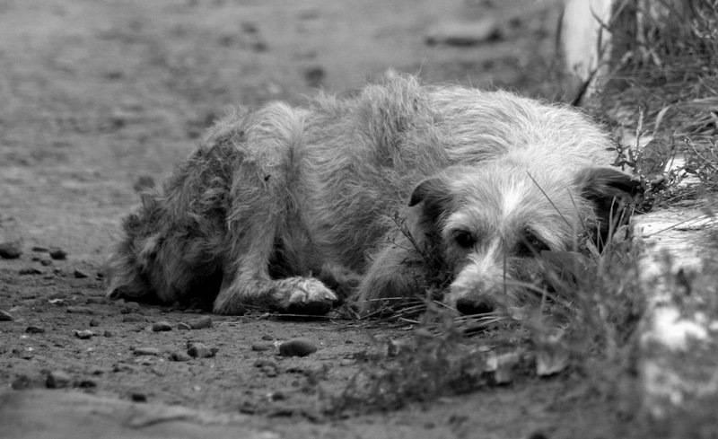 Собака умирает от старости - симптомы, признаки, что делать