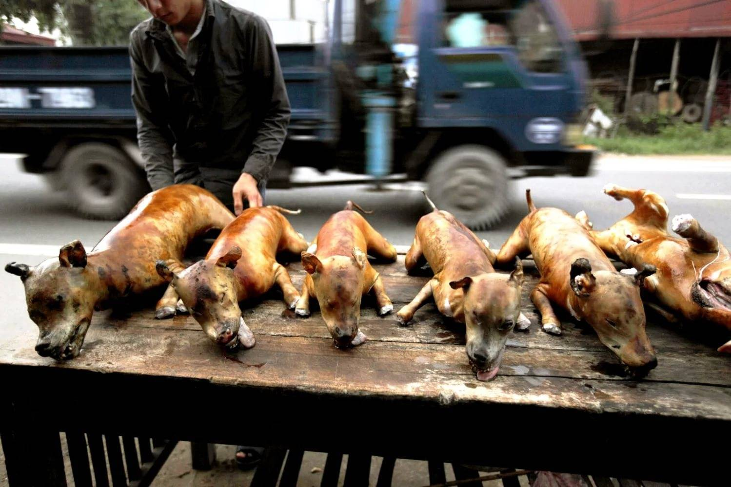 Правда ли что в китае кушают собак: почему такое происходит и как их готовят