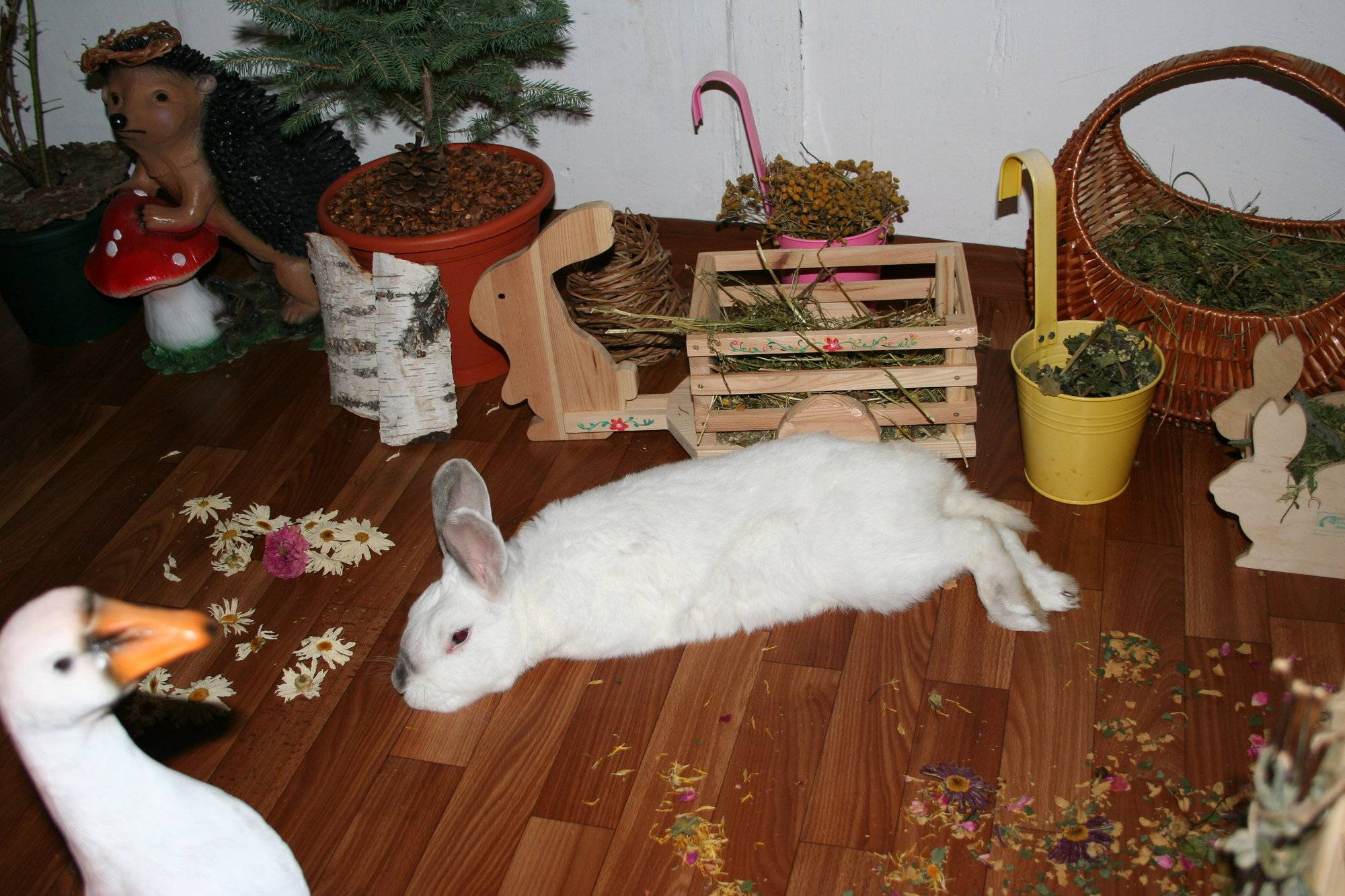 Декоративные кролики уход и содержание в домашних условиях - породы кроликов   описание, советы, отзывы, фото и видео