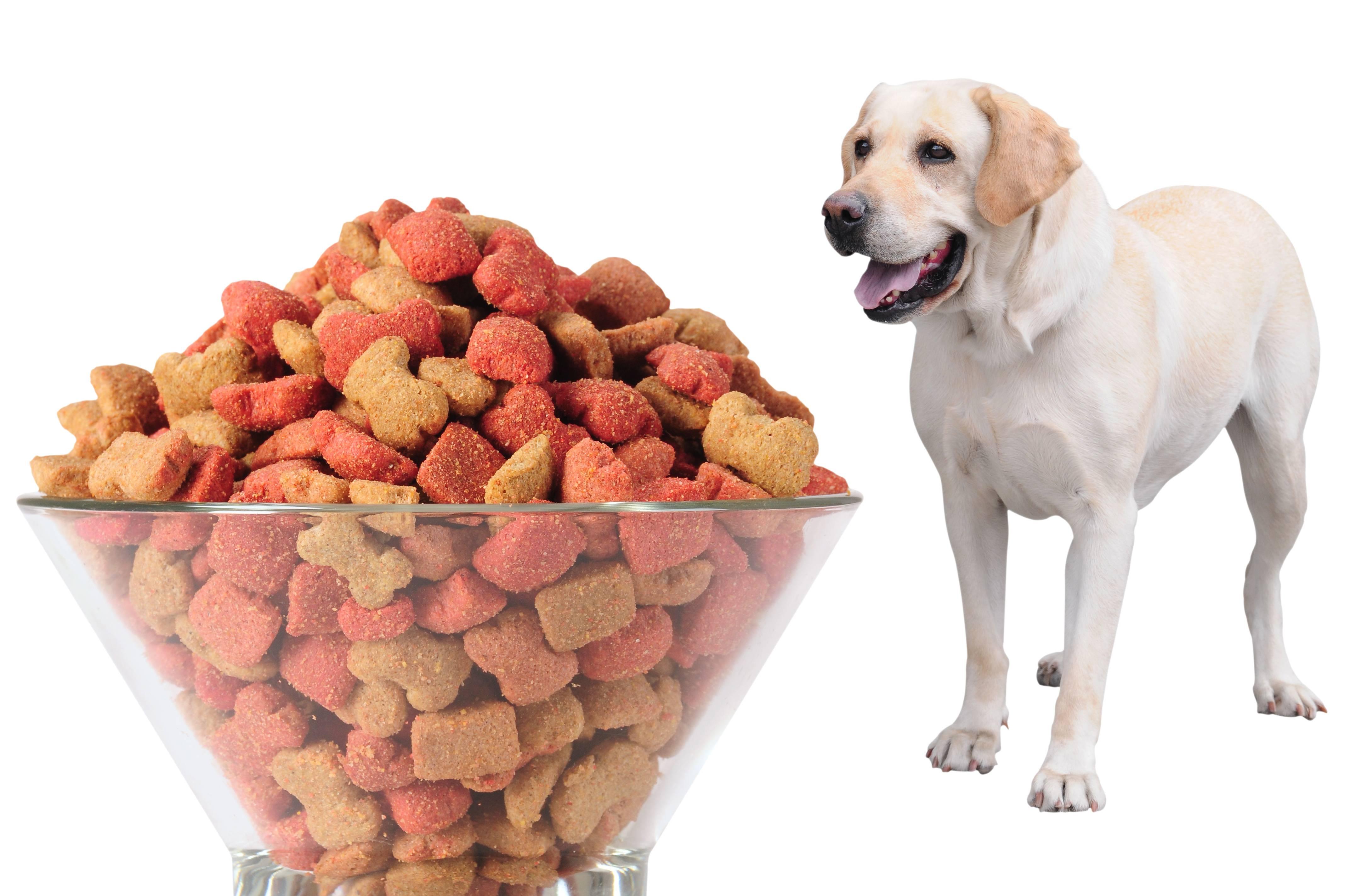 Каким кормом кормить щенка лабрадора – советы и рекомендации
