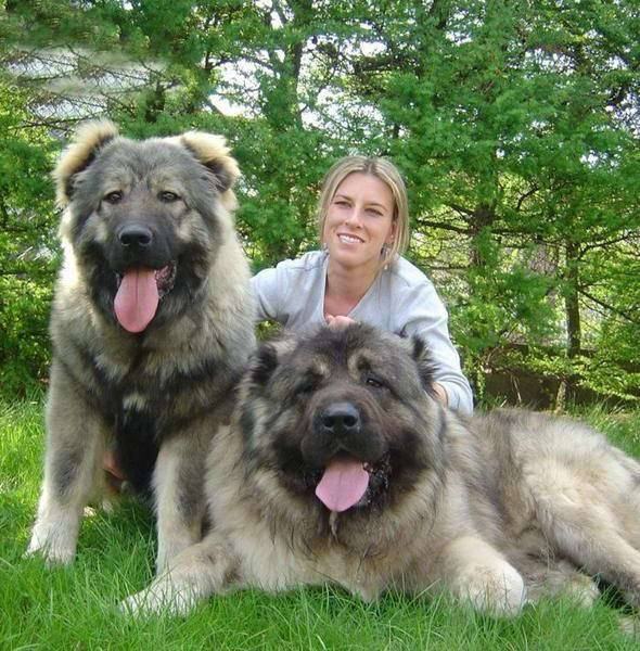 Охранные собаки: топ-10 пород