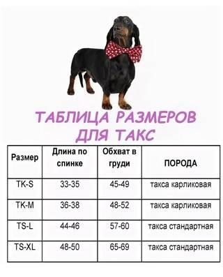 До какого возраста растут собаки мелких, средних и крупных пород?