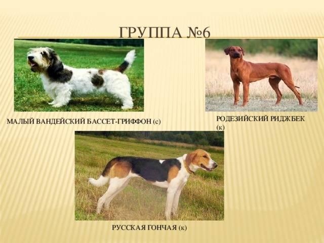 Выставки:классы, оценки и сертификаты  на выставках собак