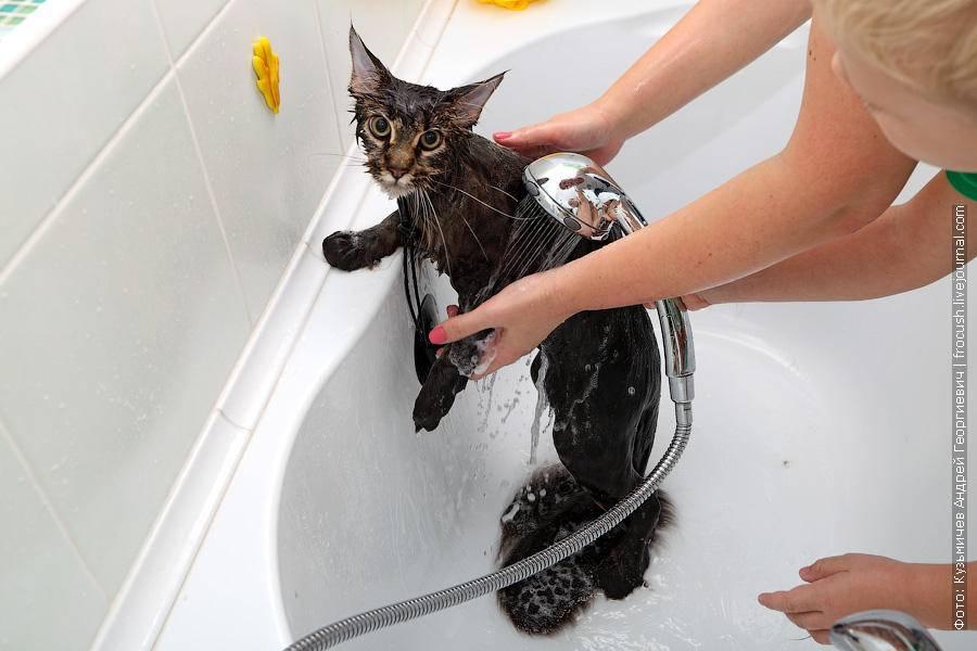 Как искупать кошку, если она боится воды?