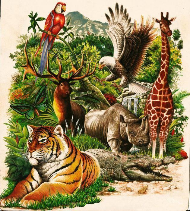 Роль животных в природе и жизни человека
