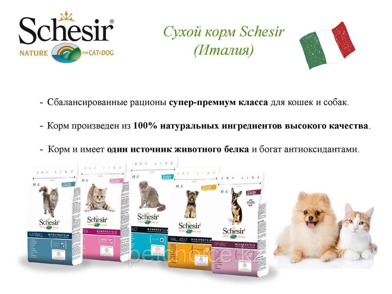 Корм для кошек шезир: какой лучше выбрать? советы по выбору +видео