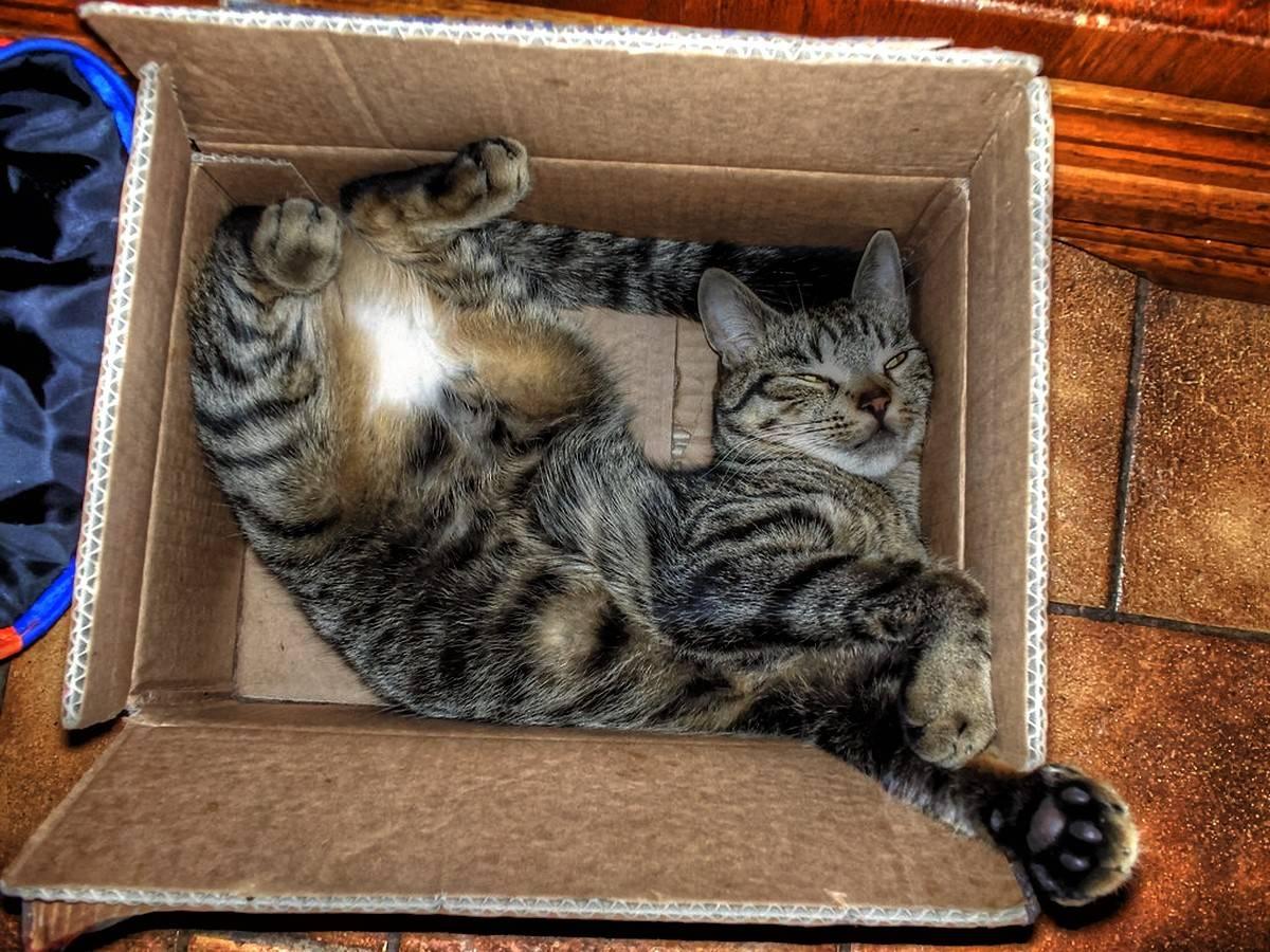 Почему коты и кошки любят коробки и пакеты | почему нравятся