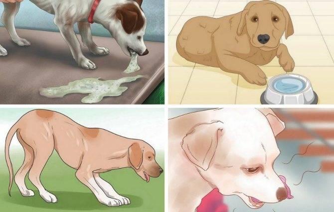 Диарея у собак