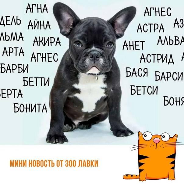 Клички для собак-мальчиков: как назвать щенка