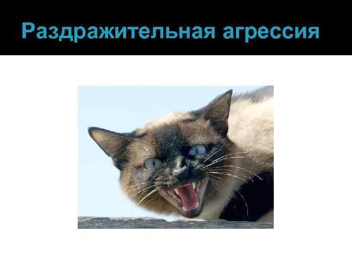 Что делать если кошка проявляет агрессию?