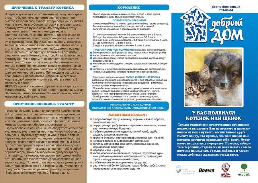 Правильное питание собак - рекомендации ветеринарного врача