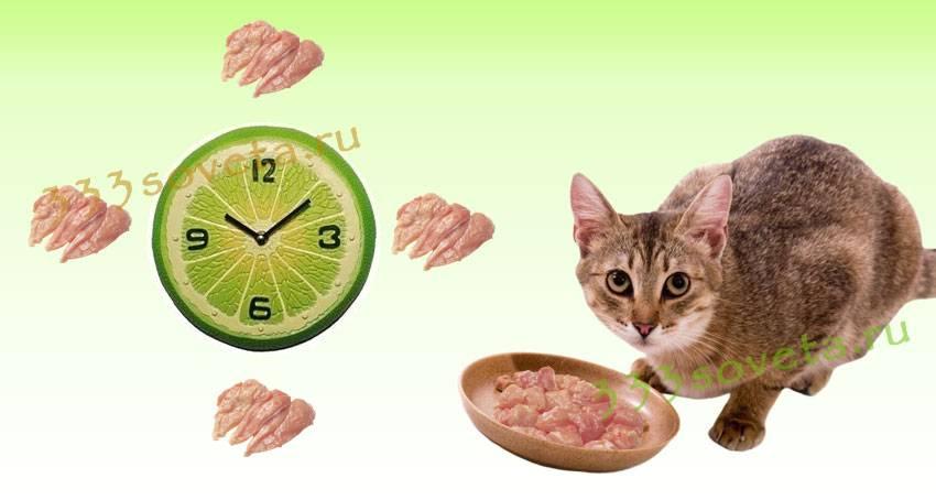 Кормление кошек. общие принципы
