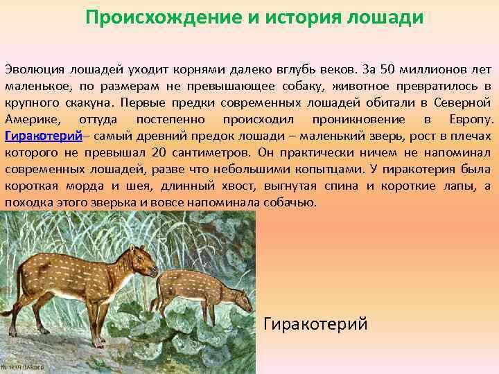 Откуда появились кошки и от кого произошли