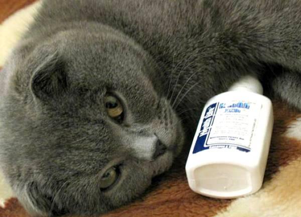 """Кот чихает: возможные причины и что делать   блог ветклиники """"беланта"""""""