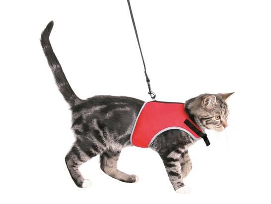 Как приучить кота к шлейке: правила выбора аксессуара и приучения питомца к нему