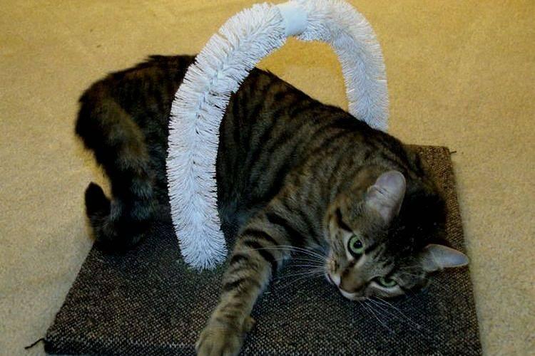 Хорошие игрушки и лайфхаки для кота. лайфхаки для котиков: как сделать совместную жизнь легче и веселее