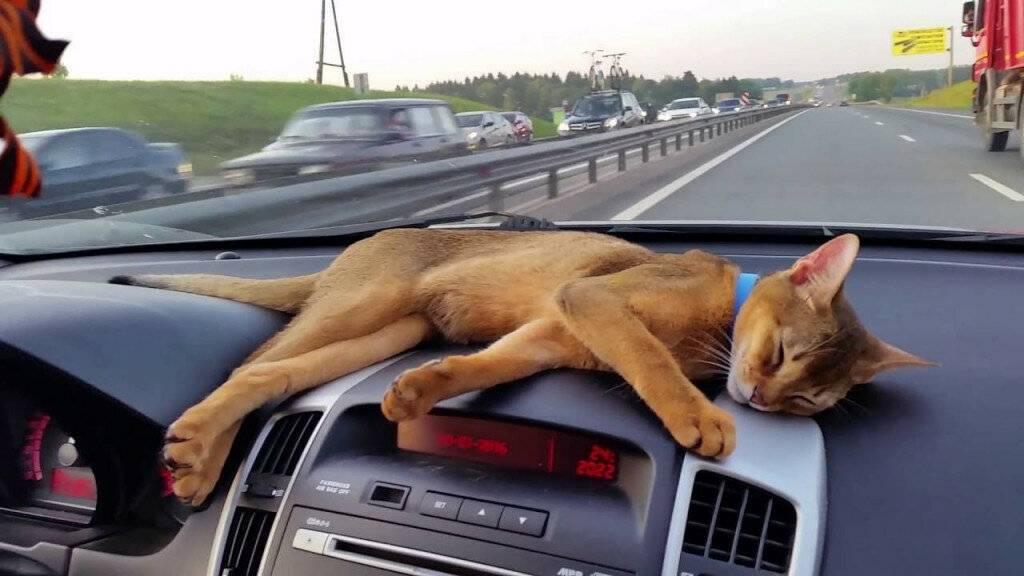 10 причин странного поведения кошки / асиенда.ру