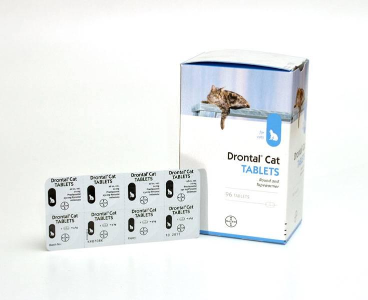 Дронтал для кошек: инструкция по применению, отзывы, аналоги