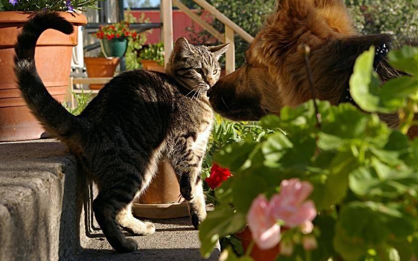 Бездомный котенок (18 фото): описание бездомных кошек. плюсы и минусы дворовых котят. как обычные кошки выживают зимой?