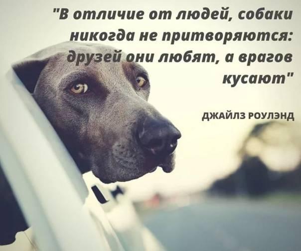 7 вредных продуктов, которые нужно исключить из рациона собаки - gafki.ru