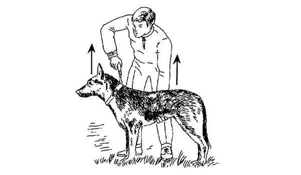 Первые команды для щенка