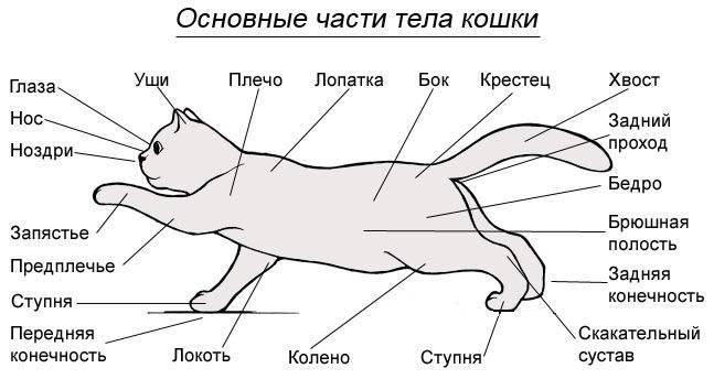 Кошачья химия