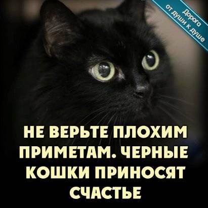 Чёрная кошка, чёрный кот как символ. исторические факты черная кошка символ чего в доме