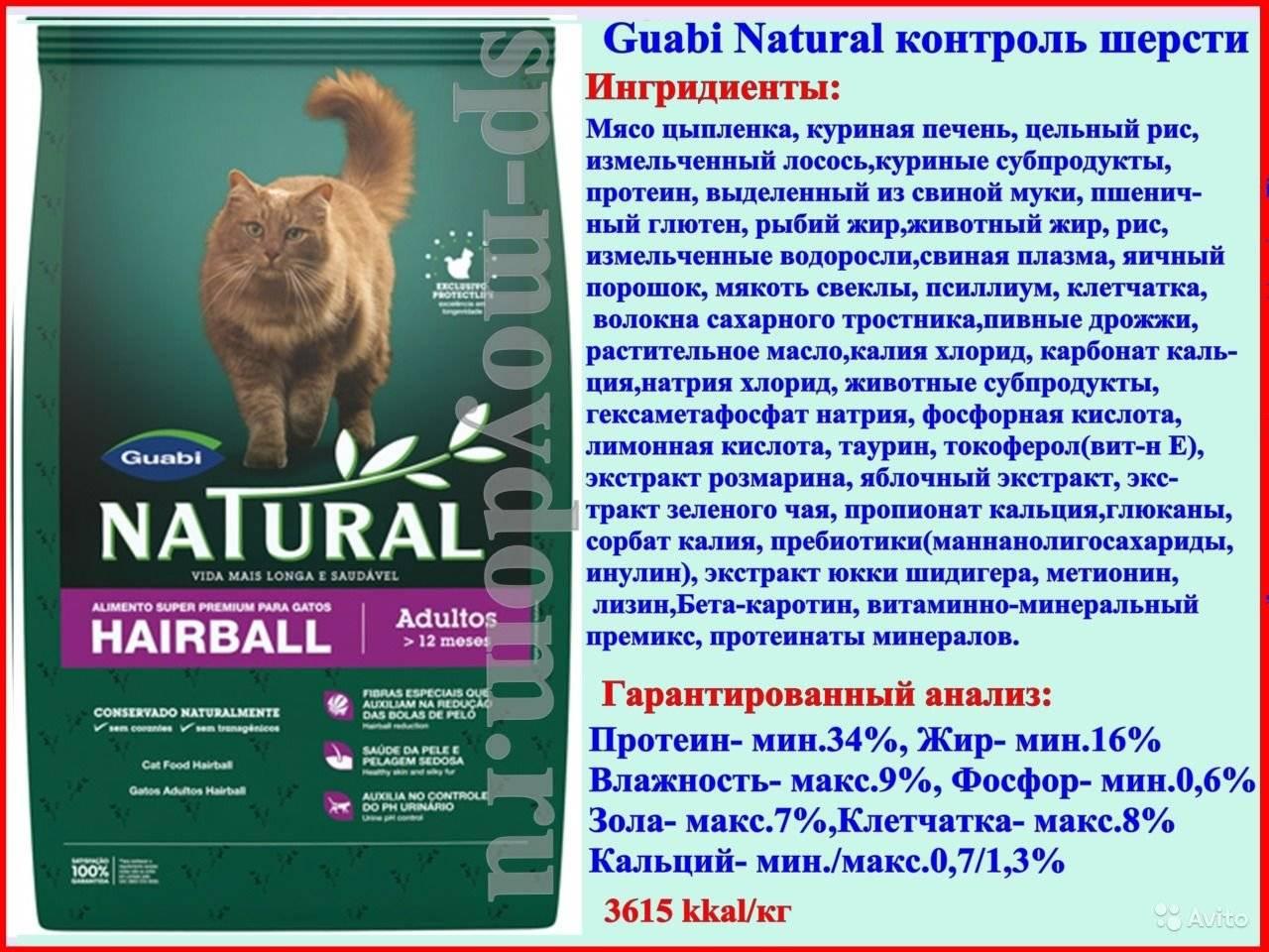 Обзор линейки кормов от фирмы almo nature для котенка и взрослой кошки
