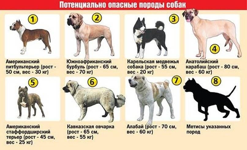 Перечень собак у которых могут выпадать глаза: как называется породы