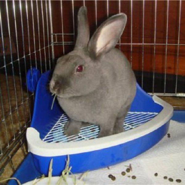 Как правильно приучить кролика к лотку — пошаговая инструкция, советы и рекомендации
