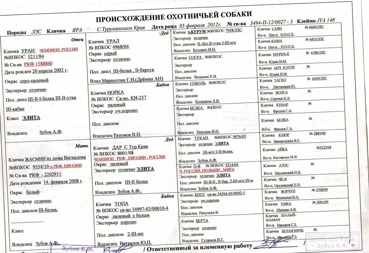Как назвать русскую гончюю: список имен для выжловок и выжлецов, мальчиков и девочек.