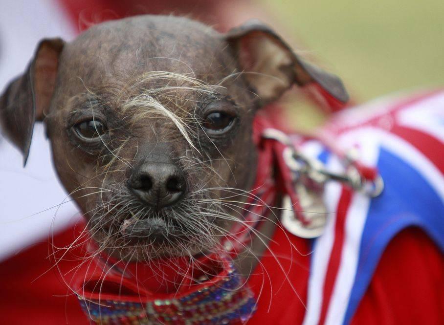 Кокапу, пуми и еще 8 пород собак с уморительным названием