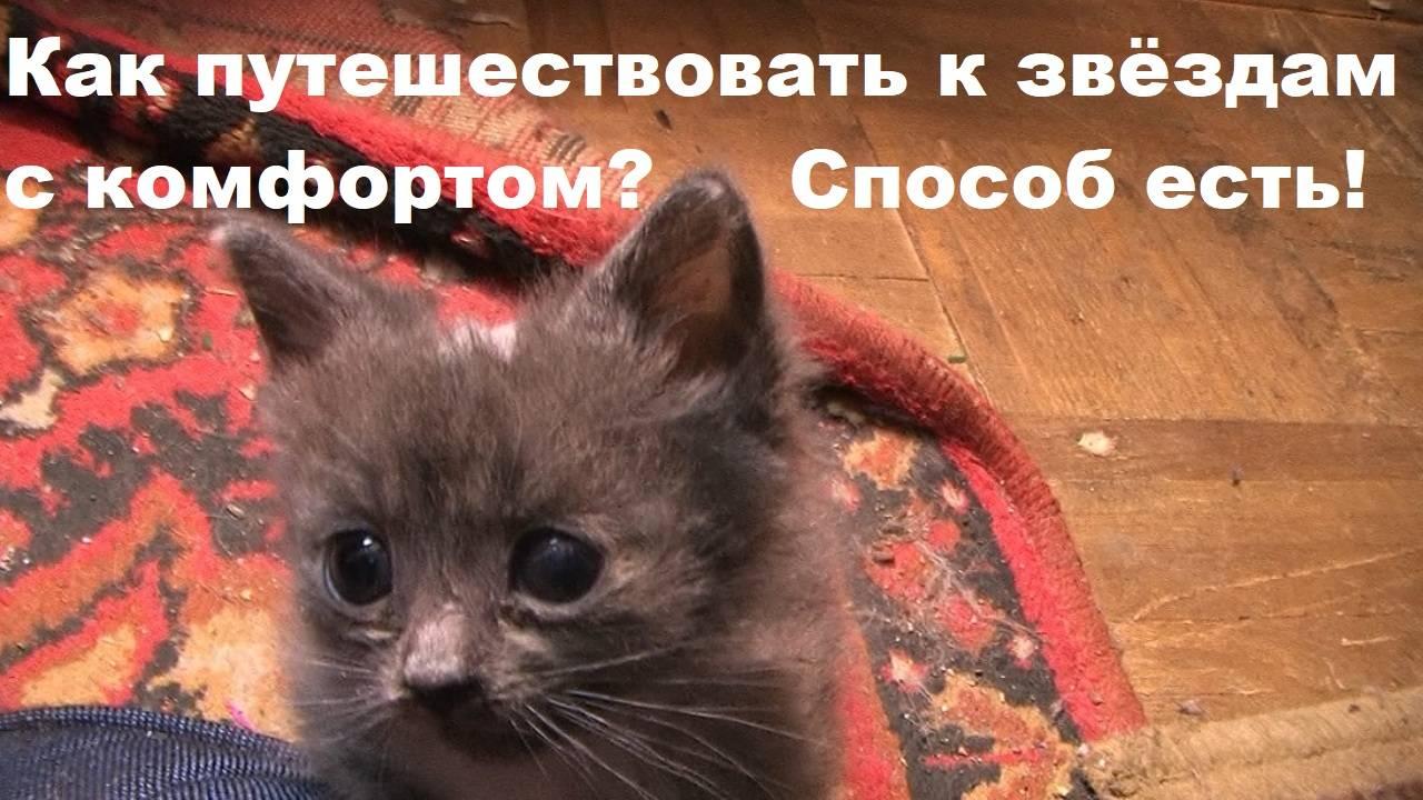 """Как подружить двух котов в одном доме   блог ветклиники """"беланта"""""""