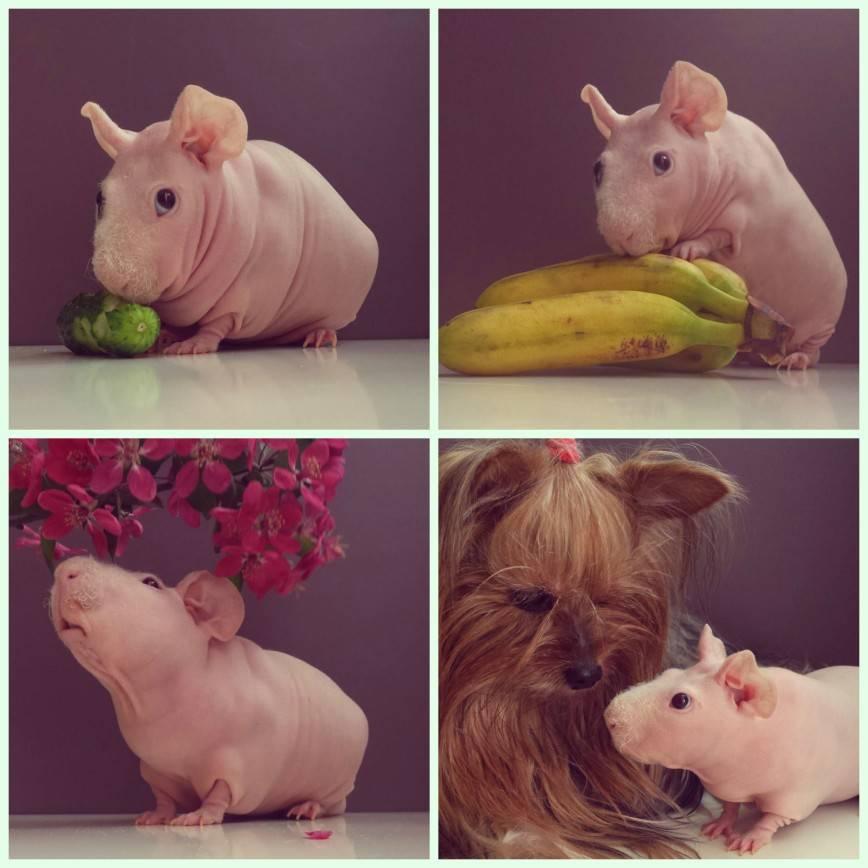 Гипоаллергенные животные: список из 30 видов и пород