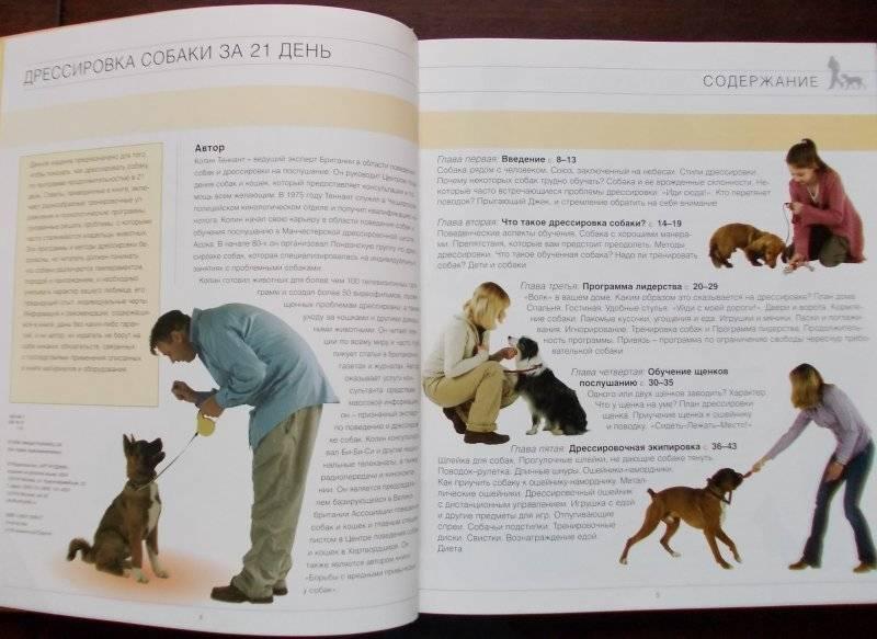 Дрессировка собак разных пород в домашних условиях