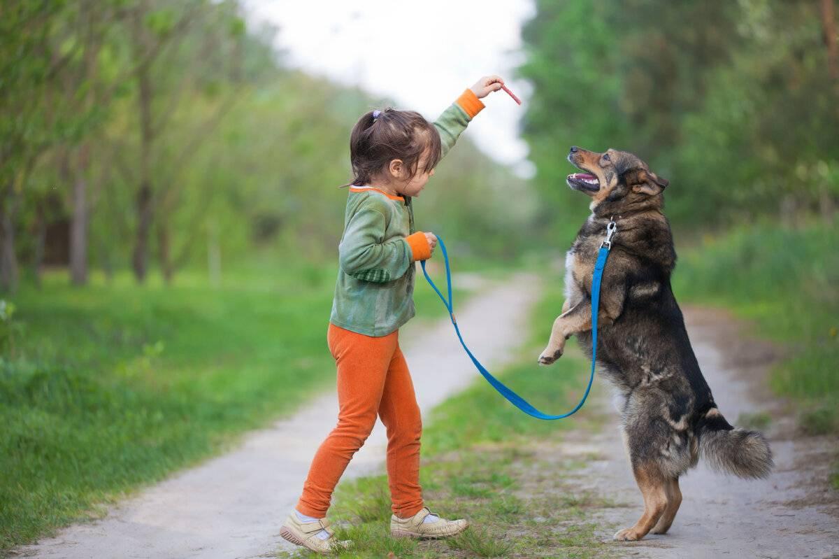 Режим прогулок с собакой