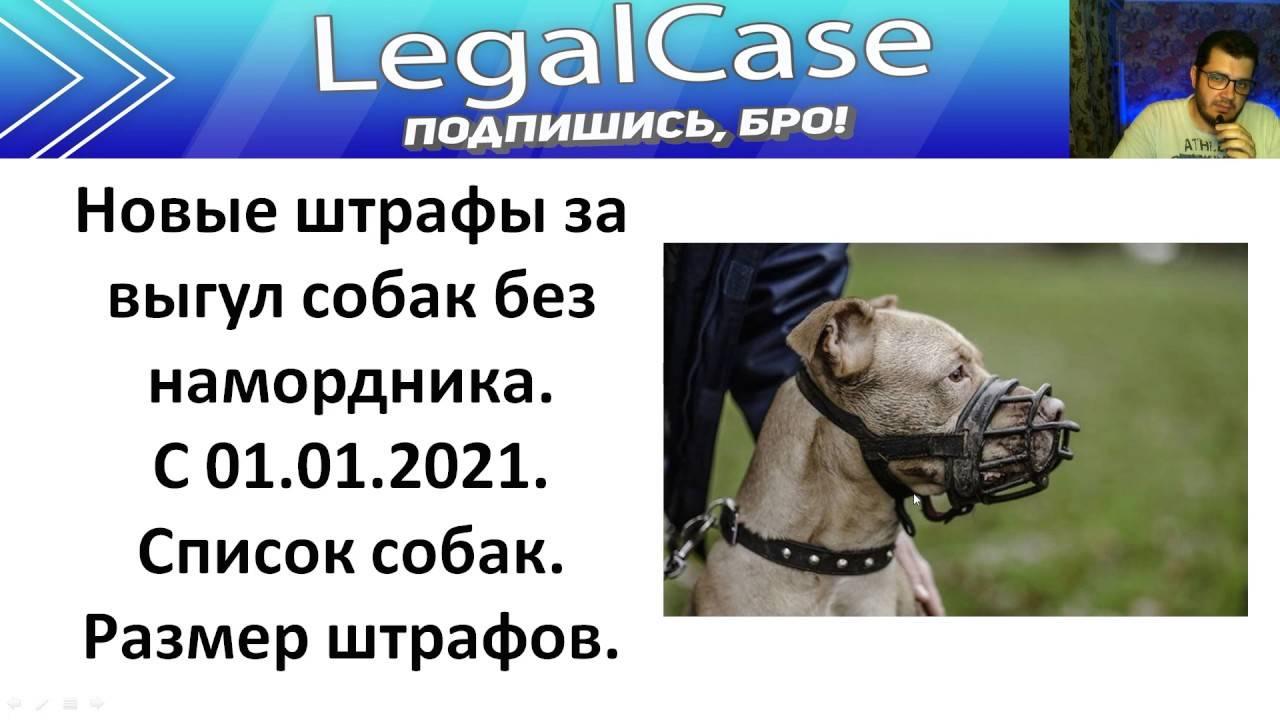 Перечень опасных собак сократили до двенадцати пород - парламентская газета