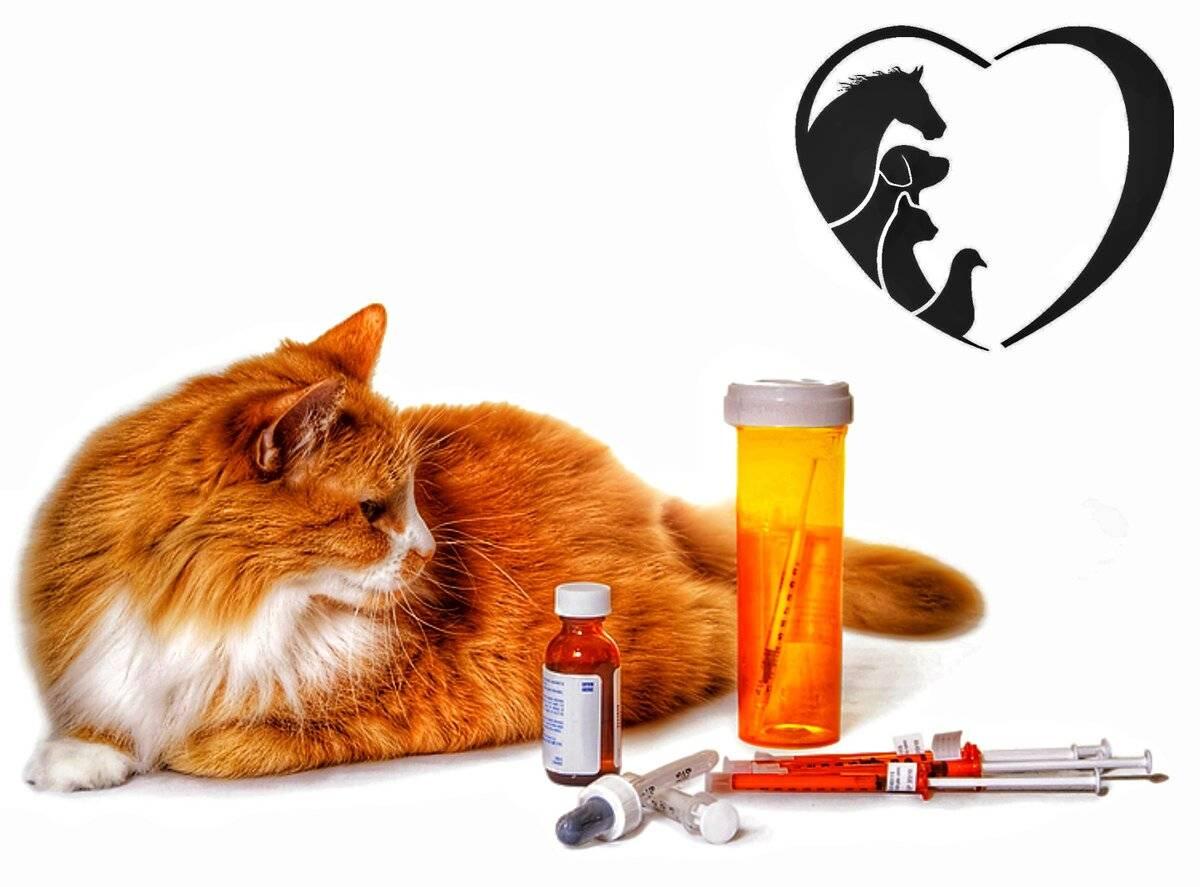 Диабет у кошек: симтомы и лечение.
