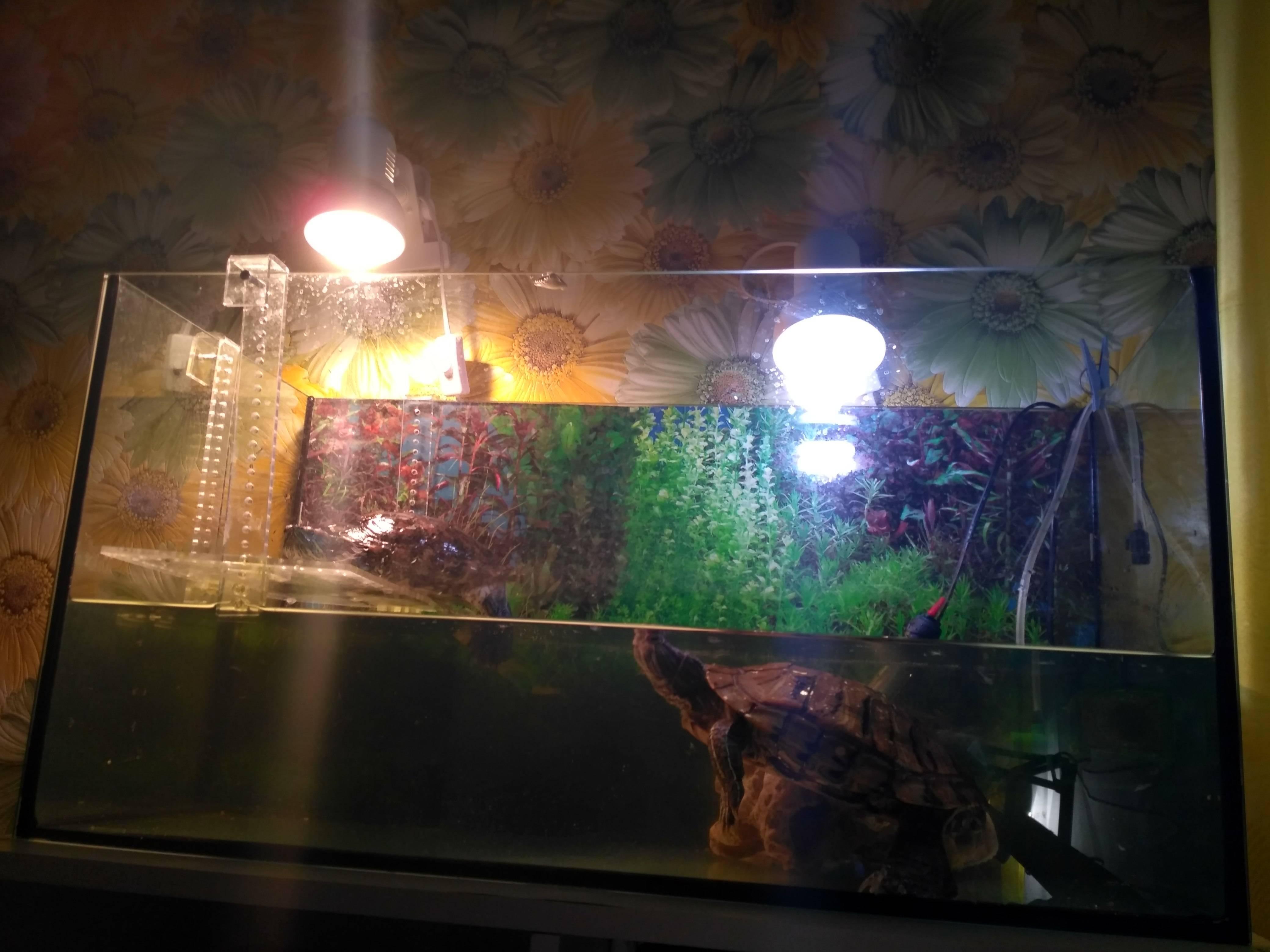 Ультрафиолетовая лампа для красноухой черепахи