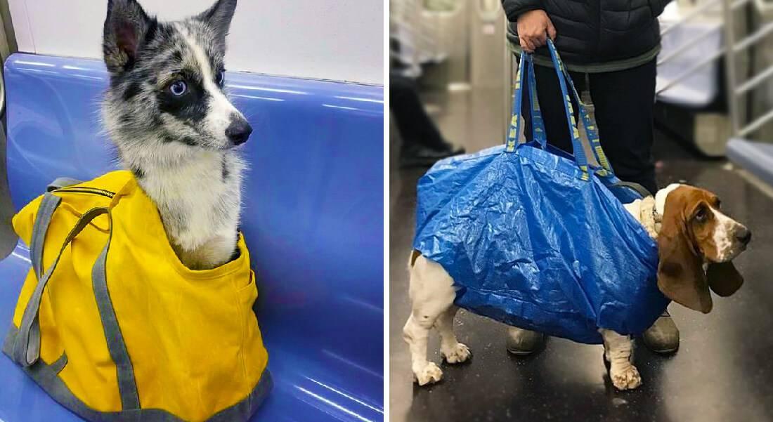 Как перевозить собаку в метро