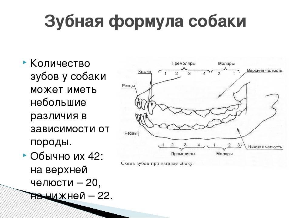 Ортодонтия домашних животных