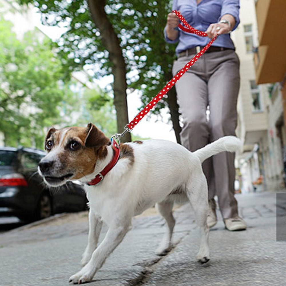 Собака тянет поводок: причины такого поведения и как это изменить