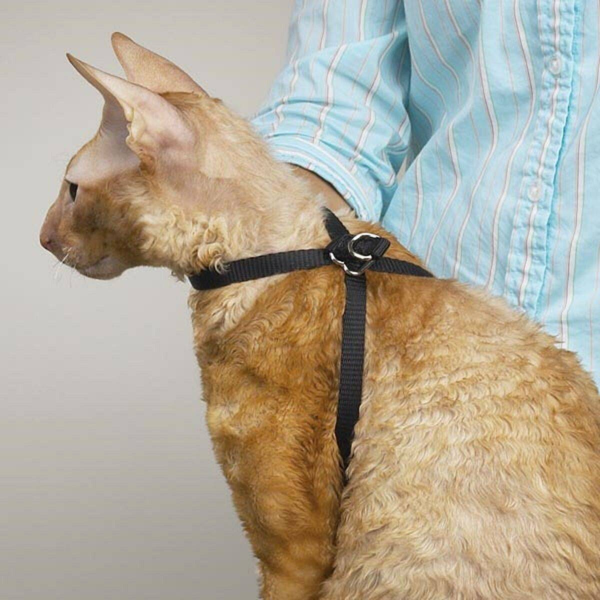 Как надеть на кошку шлейку?