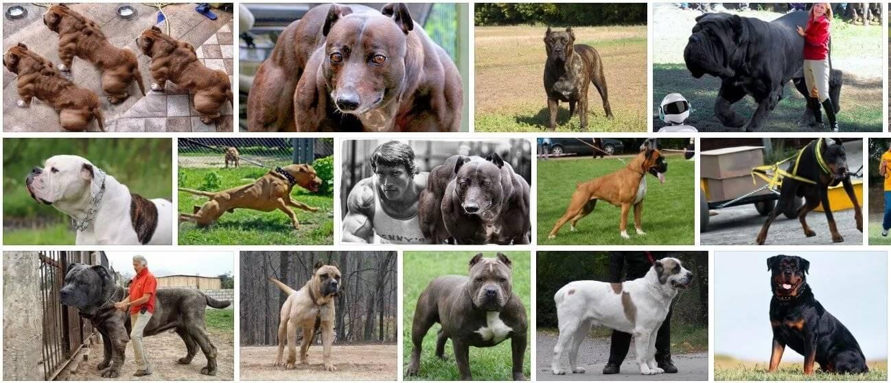 Самые умные и преданные породы собак: топ-10