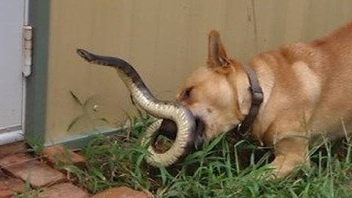 Укусы змей: профилактика, первая помощь, лечение