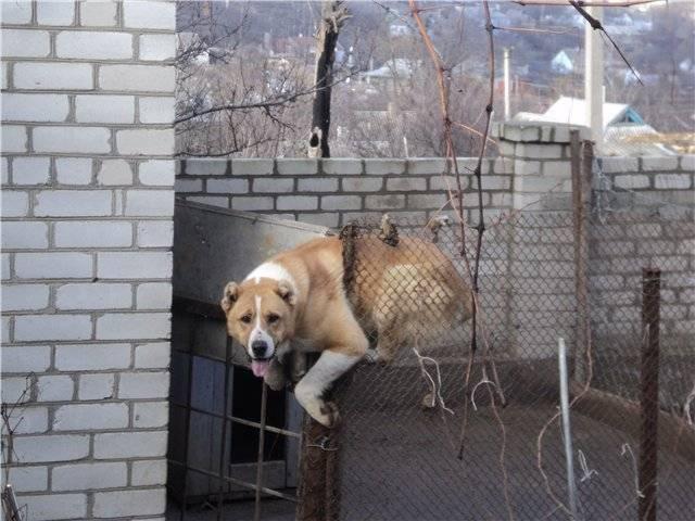 Вольер для собаки: 95 фото, чертежи, схемы и проекты вольеров для больших и маленьких собак
