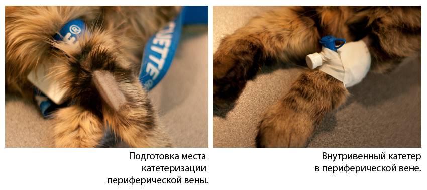 Ставим капельницу кошке в домашних условиях. пошаговая инструкция и видео