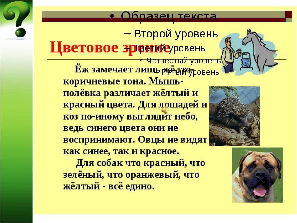 Как видят собаки окружающий мир: в темноте, цвета, людей