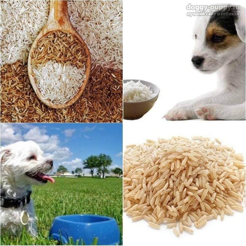 Какие крупы можно или нельзя давать собакам: полезные и вредные злаки, правила кормления