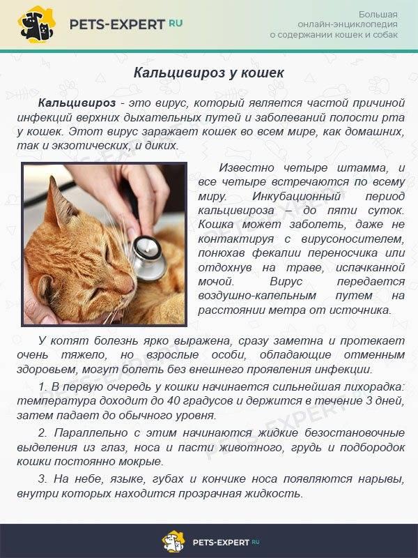 Чумка у кошек: симптомы и лечение заболевания в домашних условиях, медикоментознные и народные способы